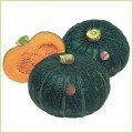 南瓜(カボチャ・かぼちゃ)・冬瓜(とうがん、トウガン)など家庭菜園の苗の販売店