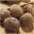 里芋(さといも・サトイモ)の苗など家庭菜園野菜の販売店