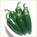 ピーマン・パプリカ・ししとう・唐辛子(トウガラシ)など家庭菜園用の野菜苗の販売店