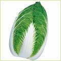 白菜(ハクサイ・はくさい)家庭菜園用の野菜苗の販売店