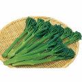 ブロッコリー・カリフラワー等の家庭菜園用の野菜苗の販売店
