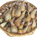 健康野菜苗・種の販売店【花育通販】らっきょう(ラッキョウ)の種芋を販売