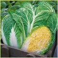 家庭菜園野菜の販売店【花育通販】白菜(はくさい)の苗を販売