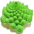 家庭菜園野菜の販売店【花育通販】ローマブロッコリーの苗を販売