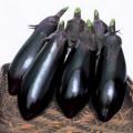 家庭菜園野菜苗の販売店【花育通販】ナスの苗を販売