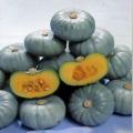 家庭菜園野菜苗の販売店【花育通販】南瓜(かぼちゃ・カボチャ)の苗を販売