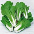 ミニ白菜(ハクサイ・はくさい)の苗を販売【花育通販】野菜苗の販売店