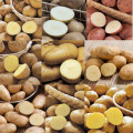 ジャガイモ食べ比べ・種芋お楽しみセットを販売【花育通販】