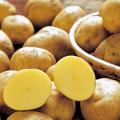 種芋(タネイモ)の販売店【花育通販】「十勝こがねの種いも」を販売