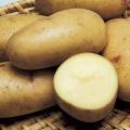 種芋(タネイモ)の販売店【花育通販】「はるかの種いも」を販売