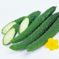野菜苗「四葉味さんごの苗」を販売しています