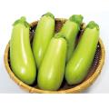 野菜苗・茄子(ナス)「緑なす「万寿満」の苗」を販売【花育通販】