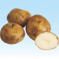 ジャガイモ「農林1号」の種芋を販売【花育通販】