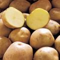 ジャガイモ「デジマ」の種芋を販売【花育通販】
