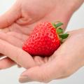 苺(イチゴ)よつぼしの苗【花育通販】