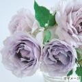 薔薇(バラ)苗木の販売店【花育通販】ルシファー