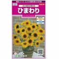 花種・ひまわり(ヒマワリ)の種販売店【花育通販】
