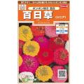 花種・百日草(ジニア)の種販売店【花育通販】
