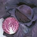 野菜種(タネ)の販売店「花育通販」レッドキャベツ(赤きゃべつ)の種を販売