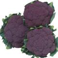 健康野菜苗・種の販売店「花育通販」紫カリフラワー「バイオレットクインの種」を販売