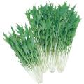野菜苗・種の販売店「花育通販」水菜(ミズナ)「京みぞれの種」を販売