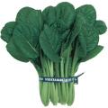 野菜苗・種の販売店「花育通販」「ちょうほう菜の種」を販売