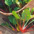 野菜種の販売店【花育通販】スイスチャードの種