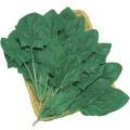 野菜種の販売店【花育通販】ホウレンソウ(ほうれんそう)のタネ