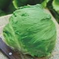 野菜種の販売店【花育通販】レタスのタネ
