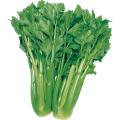 野菜種の販売店【花育通販】セロリのタネ