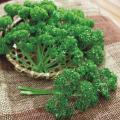 野菜種の販売店【花育通販】パセリのタネ