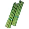 野菜種の販売店【花育通販】アスパラガスのタネ