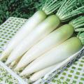 野菜種の販売店【花育通販】大根(ダイコン・だいこん)のタネ