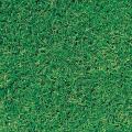 種(タネ)の販売店【花育通販】暖地型芝生「バミューダグラス・リビエラ」の種