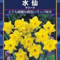 水仙(スイセン)の球根 マリークを販売【花育通販】