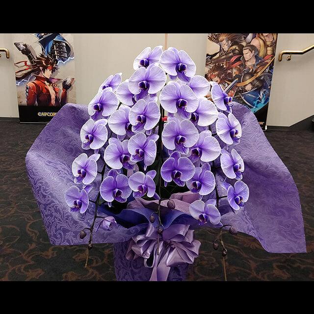 【配達無料】胡蝶蘭 紫(染め) 三本立