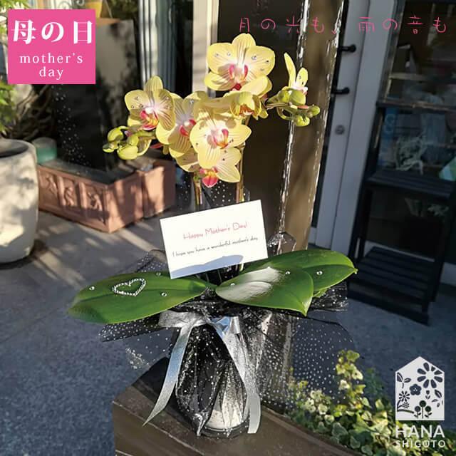 【母の日限定】SWAROVSKI付き胡蝶蘭2本立 淡い黄色