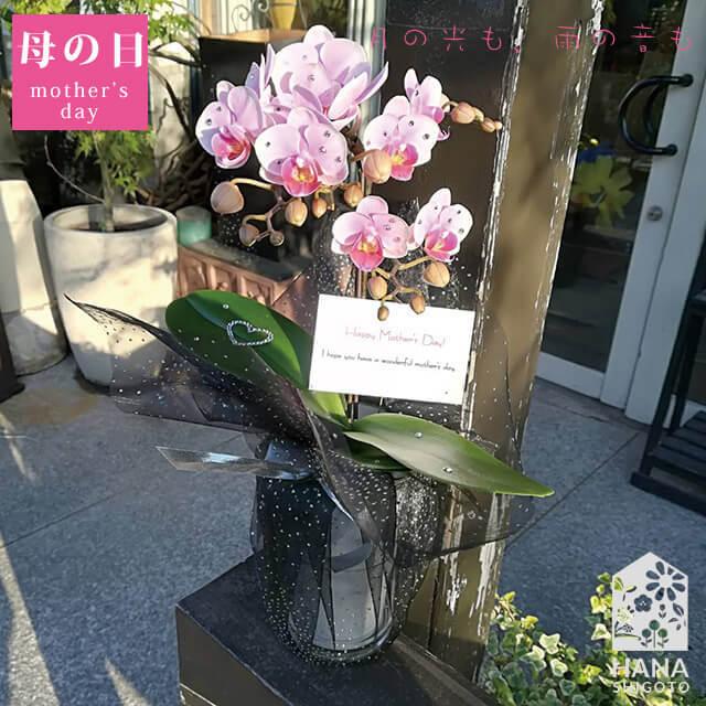 【母の日限定】SWAROVSKI付き胡蝶蘭2本立 淡いピンク