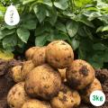 北杜市 のっぽ農園 記憶に残る野菜 土付き きたあかり 新じゃが 約3kg