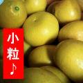 中山さんの文旦(パール柑)♪小粒【10kg】お手頃食べきりサイズ♪ちょこっと訳あり☆熊本県産