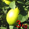 【ちょっとわけあり】スカッと、すっぱい★太陽と潮風が育てた♪中山さんのレモン 3kg