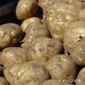 【北海道産】とうや・ホッカイコガネ食べ比べセット 約9kg 10月中旬ごろ発送予定