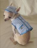 Blue Little Star Dog Harness ブルー リトル スター ドッグ ハーネス