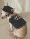 Camouflage Dog Harness カモフラージュ ドッグ ハーネス
