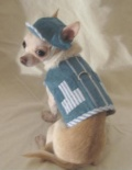 Denim Little Stripe Dog Harness デニム リトル ストライプ ドッグ ハーネス