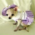 Abby&Adela Selection(セレクション)Lilac Delicate Daisy Dog Harness Dress ライラック デイジー ハーネス ドレス セット