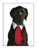 Doggie Design(ドギーデザイン)Red, Black & Grey Satin Neck Ties & Collar レッド ブラック グレー ネクタイ セット