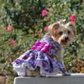 Doggie Design(ドギーデザイン)Purple and Red Floral Dress パープル レッド フローラル ドレス