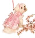 Sweetheart Pink Satin Garden Dress スイートハート ピンク ガーデン ドレス セット