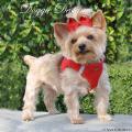 Doggie Design(ドギーデザイン)American River Ultra Harness Red アメリカン リバー ウルトラ ハーネス レッド